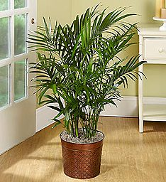 Palm Floor Plant
