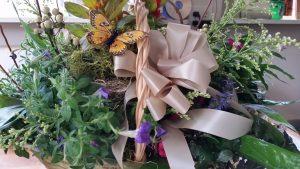 Windfall Garden 2 - Our Windfall Garden 2 Full Colorful plant garden