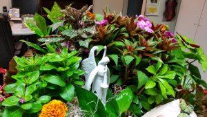 Sentimental Gardens