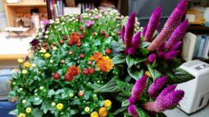 Winters Garden